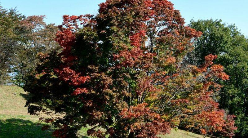 紅葉の季節・詐欺メール